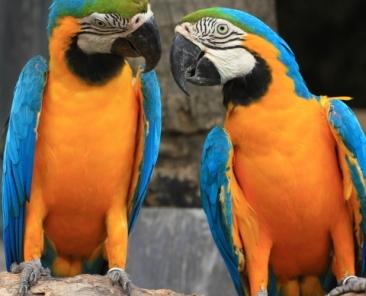 Parrots-480